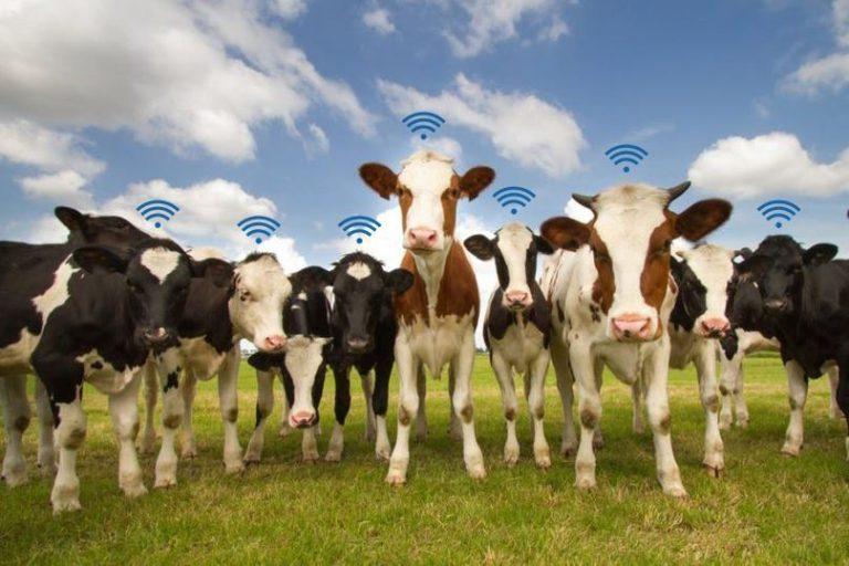 Çiftliklerin çoğalması nedeniyle, birçok tarımsal işletme geniş bir alana yayılmış toprak ve hayvanlara sahiptir. Tüm lokasyonları kişisel olarak izlemek, tüketmek ve pratik değildir. Burada da LoRa ağı üzerinden IoT çözümü sunuyoruz. Sensörler hem alanların hem de hayvanların ölçümlerini yapmaktadır. Hayvanlara sensörler bağlanarak durumları izlenebilir, kızgınlık dönemleri takip edilebilmektedir, lora sürü takibi,